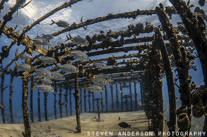 The Willaurie a naturally sunken ship off Nassau Bahamas.... by Steven Anderson