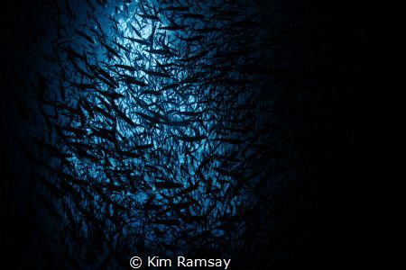 Looking up in Swallows Cave by Kim Ramsay