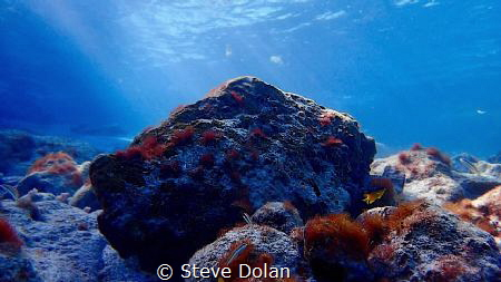 """Serene Scene"" clear water, bright sunshine, and tranquil... by Steve Dolan"