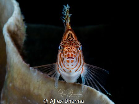 Eye contact by Ajiex Dharma