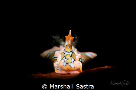Sagaminoptheron psychedelium by Marshall Sastra