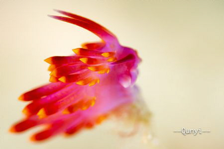 A running rabbit. A nudibranch facing against the current... by Qunyi Zhang