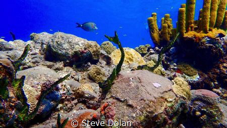 """Reef Life""  A snapshot of Varied life on a reef. Taken i... by Steve Dolan"