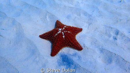 Cushion Sea Star. Taken in Carlisle Bay, Barbados with Ol... by Steve Dolan