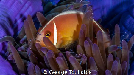 Nemo with company!!! by George Touliatos