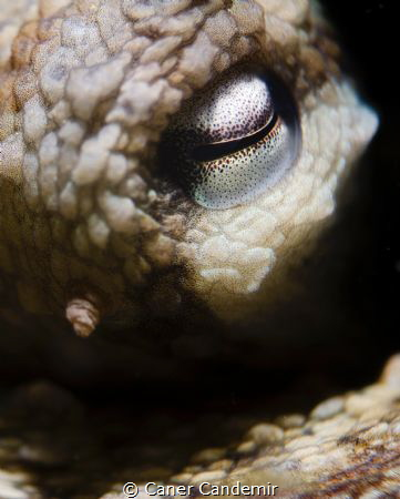 Octopus Eyes detail by Caner Candemir