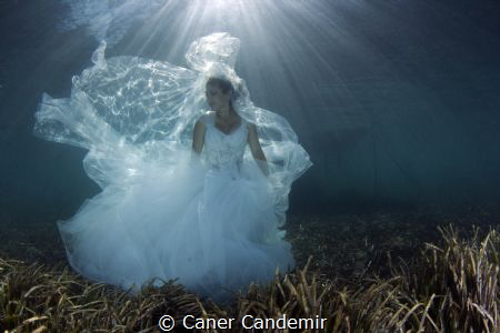 Underwater Wedding Shot by Caner Candemir