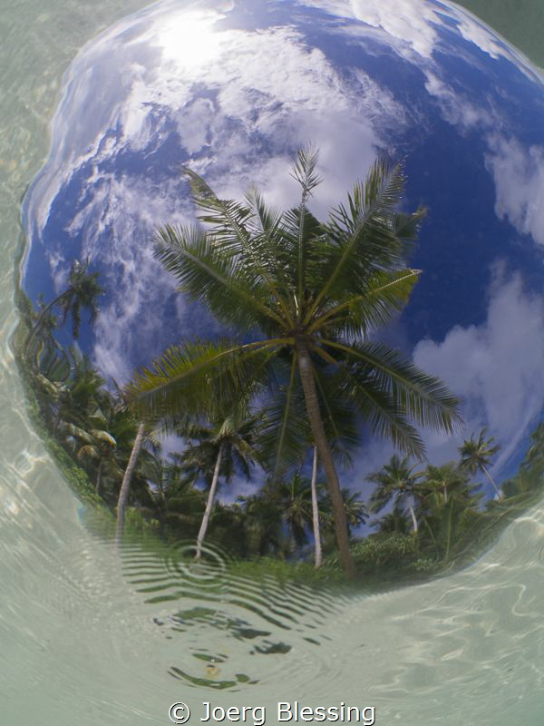 Coconut tree through Snell's window by Joerg Blessing