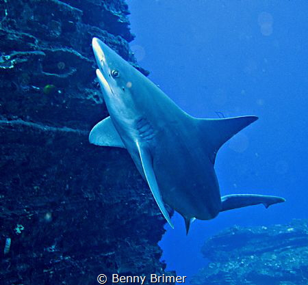 Sand-Shark in Kauai by Benny Brimer