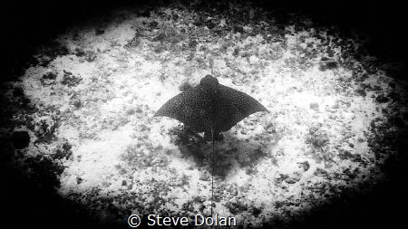 Eagle Ray taken in Cozumel Mexico with Olympus TG-4 by Steve Dolan