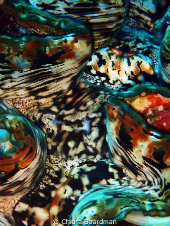Macro photo - Close up of a giant clam, I was drawn to th... by Chiara Boardman