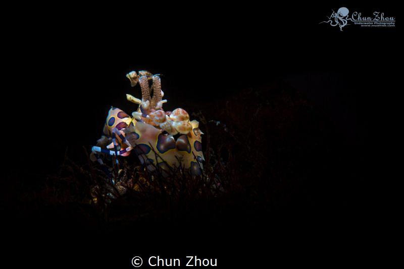 Alone by Chun Zhou