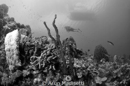 under the boat. by Arun Madisetti