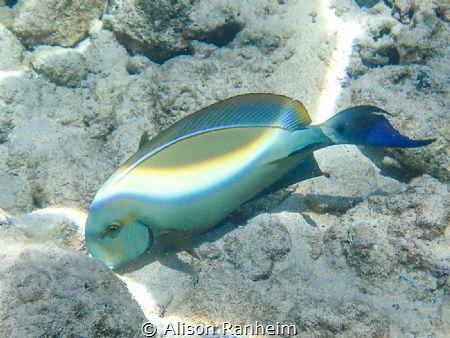 Ahihi Bay, Maui by Alison Ranheim