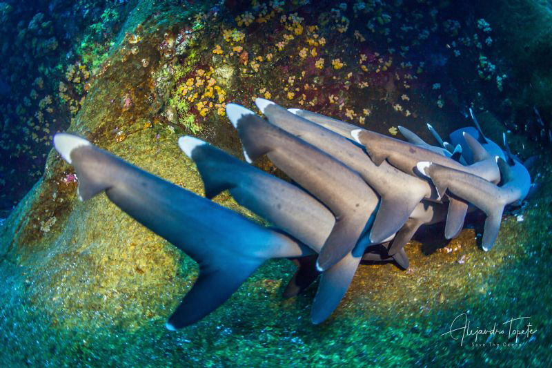 Tails of Sharks, Roca Partida México by Alejandro Topete
