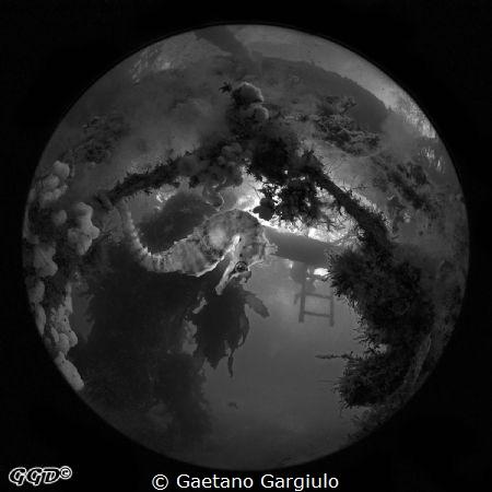 flash off then black-white conversion by Gaetano Gargiulo