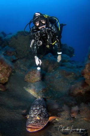 Diver with big grouper buddy ! by Claude Lespagne