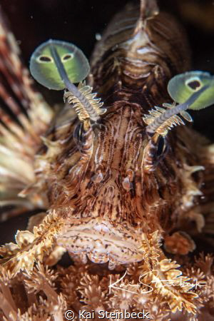 Beautiful lion fish in all its glory by Kai Steinbeck