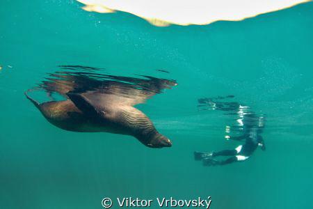 Sleeping Sea Lion and his Fan (Concha Perla, Isla Isabela... by Viktor Vrbovský