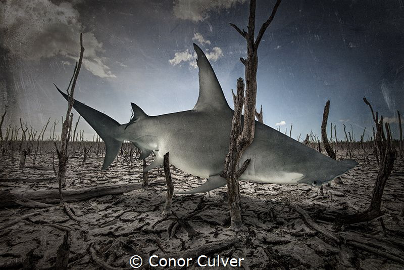 """Fading Feeding Grounds"" This background is an area that ... by Conor Culver"