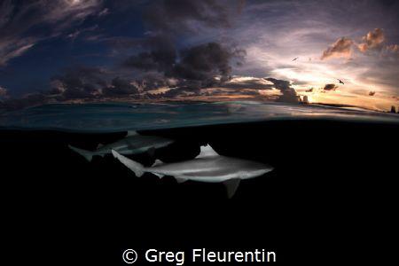 Sharks and sunset by Greg Fleurentin