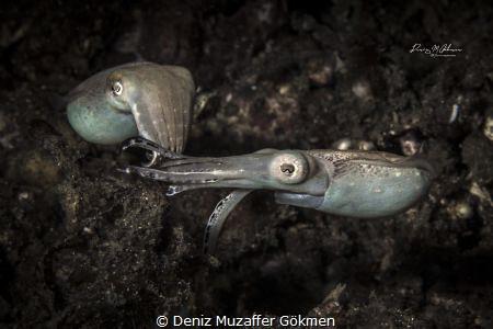 mating time by Deniz Muzaffer Gökmen