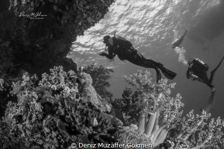 Beauty Red Sea by Deniz Muzaffer Gökmen