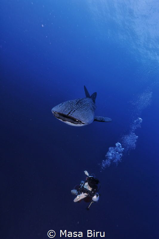 whale shark and diver by Masa Biru