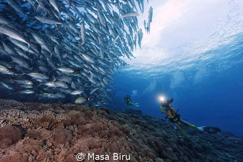 jack fish and divers by Masa Biru