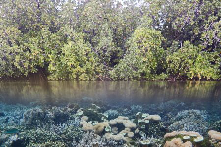 Healthy Marine Ecosystem by Wawan Mangile