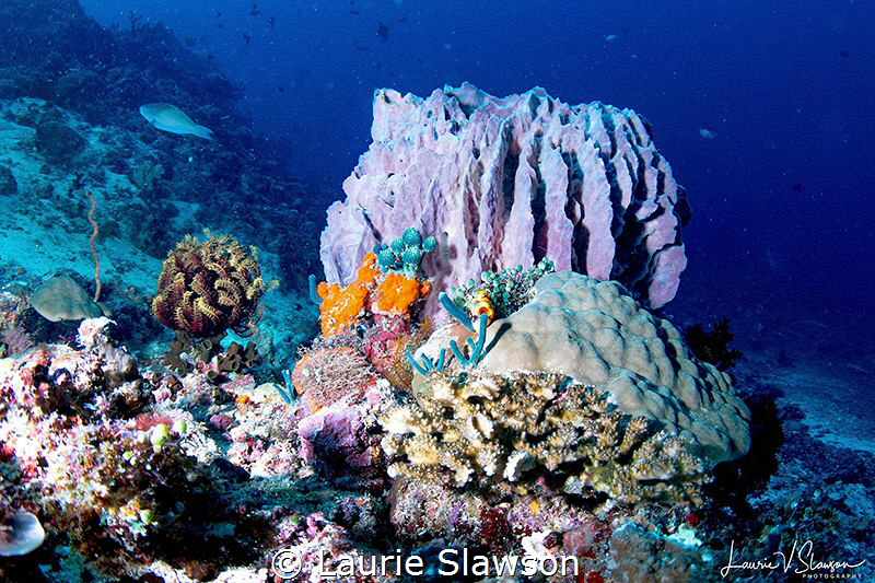 Barrel Coral at Sombrero Peak/Photographed with Tokina 10... by Laurie Slawson