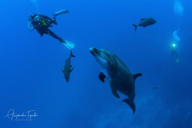 Dolphin with Divers and Jacks, San Benedicto Island México by Alejandro Topete