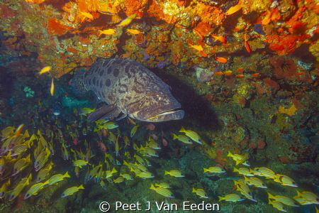 Potato bass and friends by Peet J Van Eeden