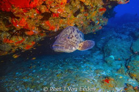 The cleaning station  Potato Bass waiting to be cleaned... by Peet J Van Eeden
