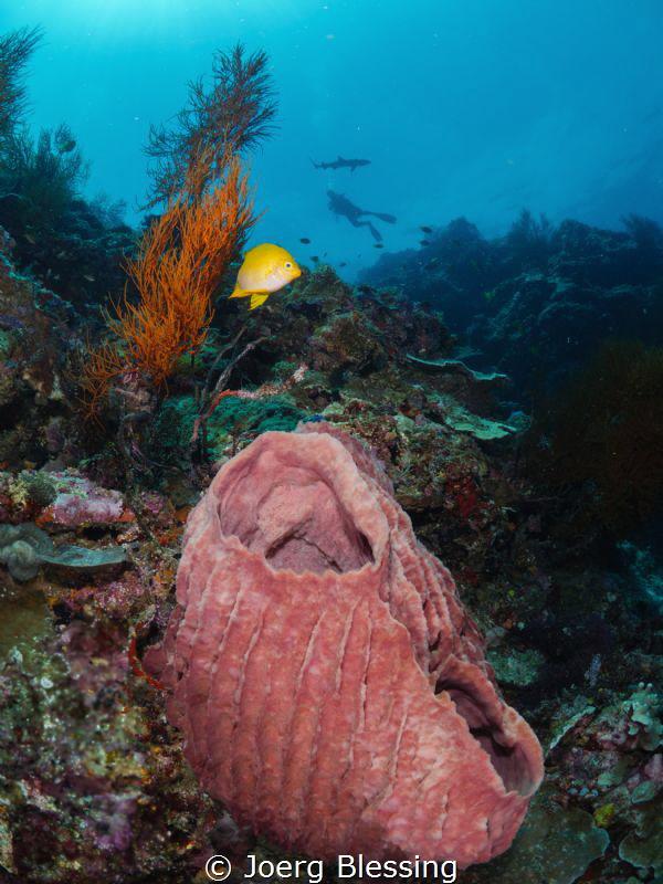 Sponge, butterfly fish, diver, whitetip shark......the la... by Joerg Blessing
