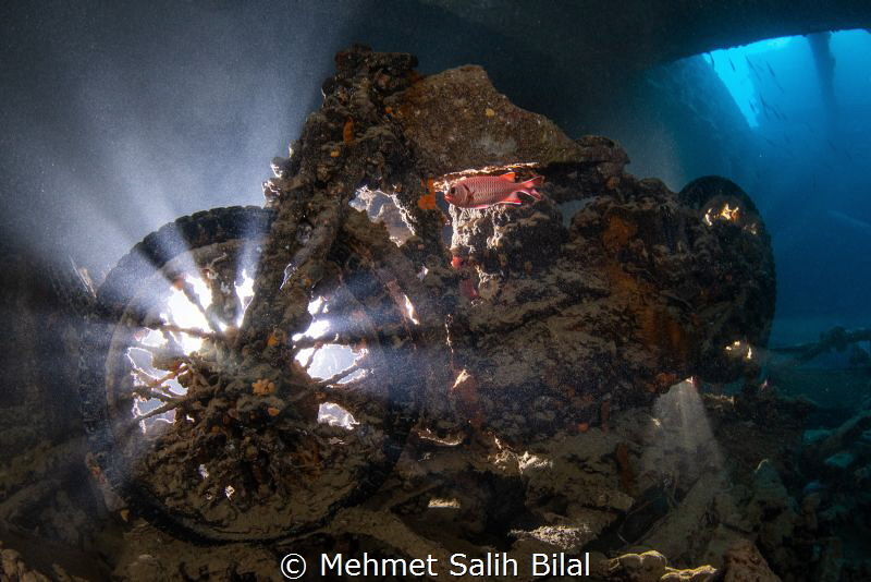Famous motorbike in Thistlegorm with a soldierfish  at 5.... by Mehmet Salih Bilal