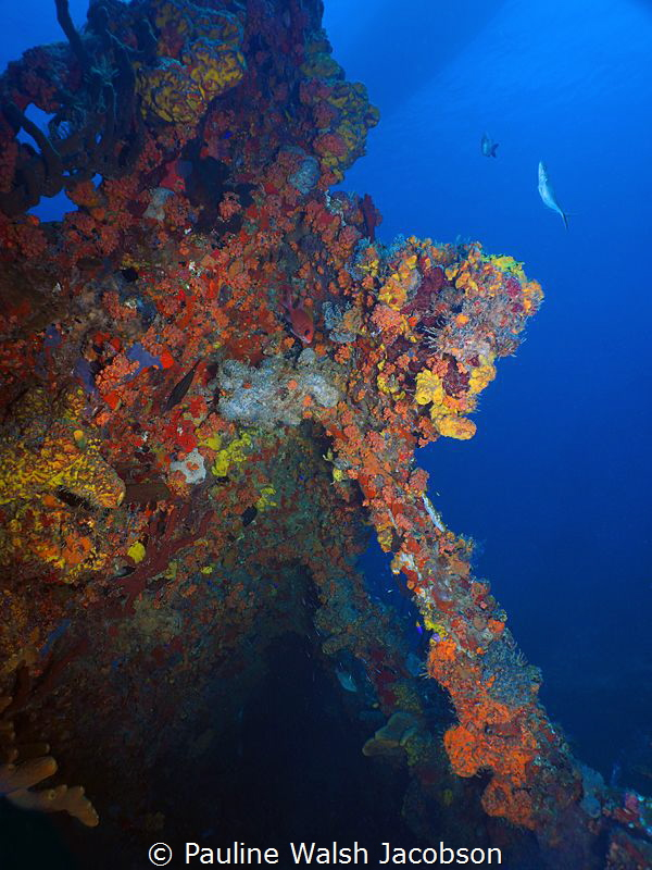 Wreck of the RMS Rhone, Salt Island, British Virgin Islands by Pauline Walsh Jacobson