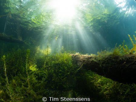 Lightshow in a pond near Antwerp (Put van Ekeren). by Tim Steenssens