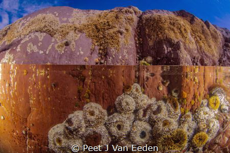 Rock pool with sandy anemones by Peet J Van Eeden