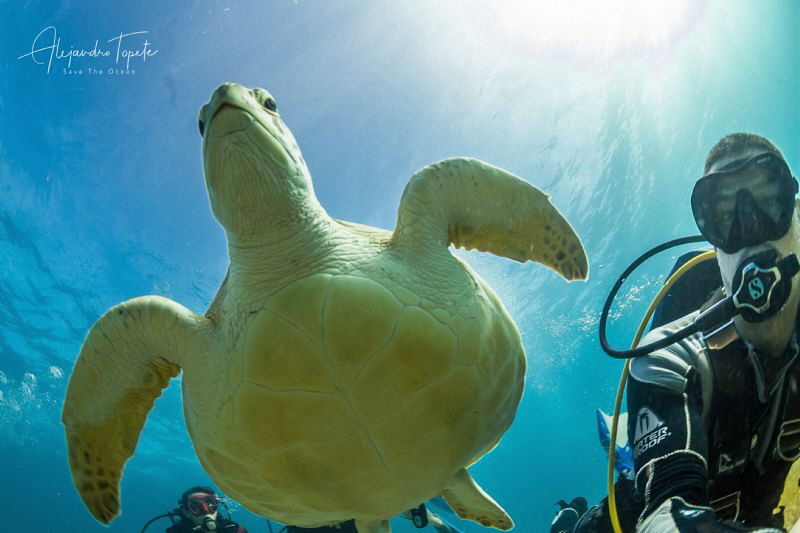 Selfie with Turtle, Cancun México by Alejandro Topete
