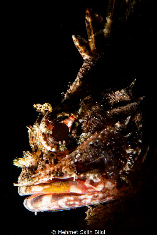 Scorpionfish. by Mehmet Salih Bilal