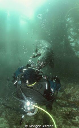 Big Kiss. Harbor Seal and new friend in California's Chan... by Morgan Ashton