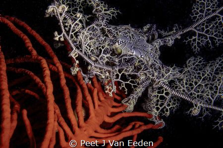 Ocean Basket