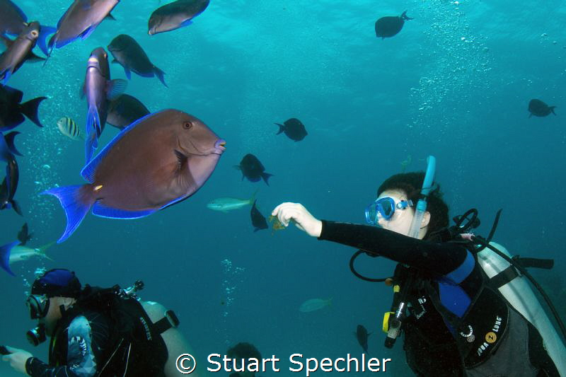 Young diver interacting with a large school of curious At... by Stuart Spechler