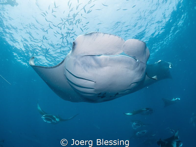 This was a nice postdive manta session. A dense patch of ... by Joerg Blessing