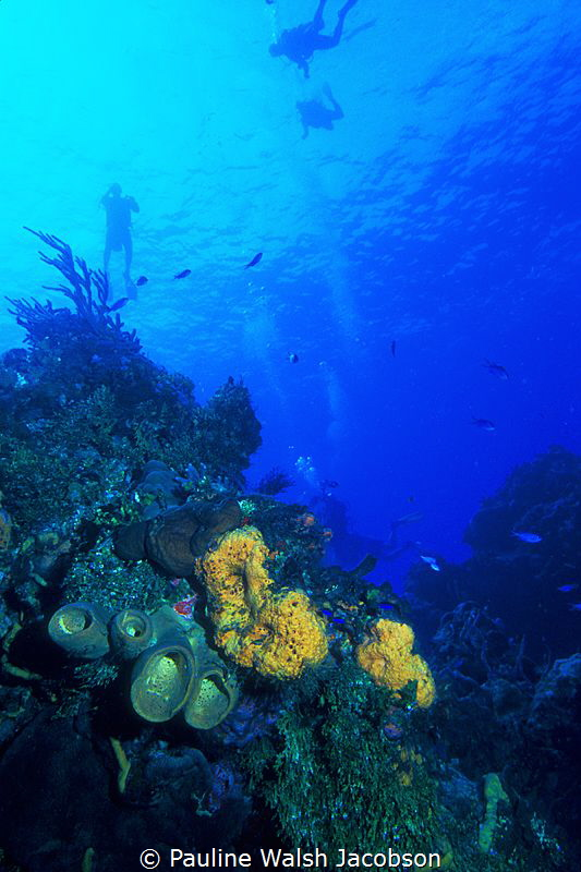 Divers, Santa Rosa Wall, Cozumel, Mexico, 35mm slide film by Pauline Walsh Jacobson