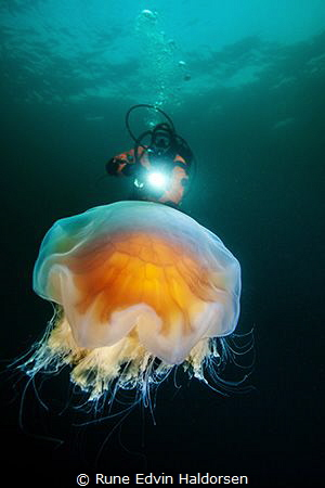 Diver and lions mane jelly by Rune Edvin Haldorsen