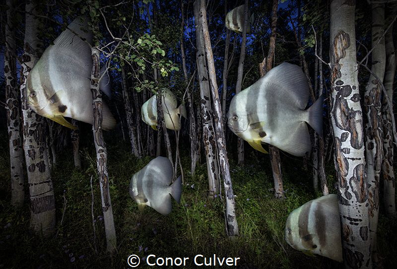 """Bat Fish Night"" part of my Underwater Surrealism body of... by Conor Culver"