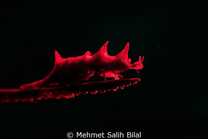 Red dragon. by Mehmet Salih Bilal
