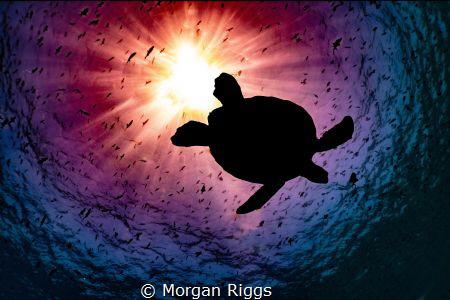 Interstellar by Morgan Riggs